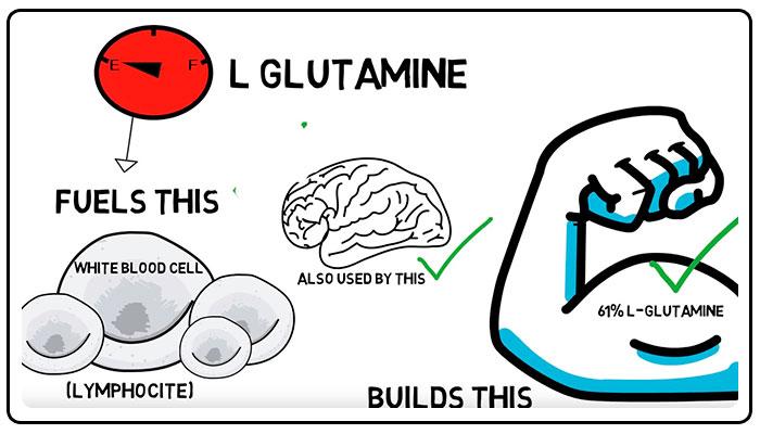 Antikatabolicheskiy effekt